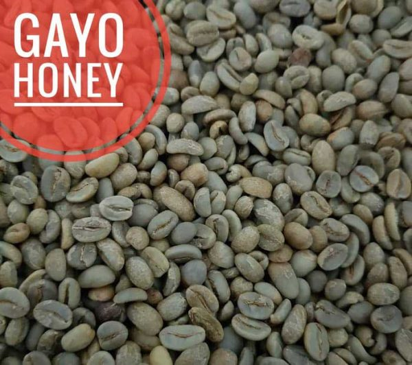 gayo honey green bean