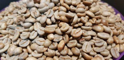 gayo honey green coffee beans