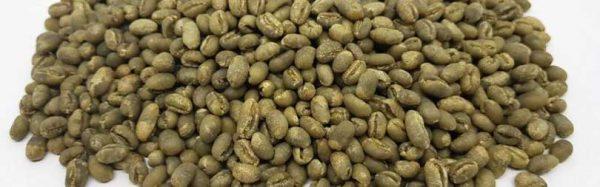 gayo peaberry coffee grean bean