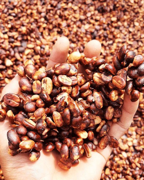 honey specialy coffee beans