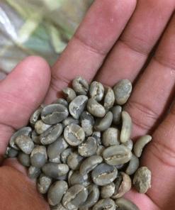 Bali kintamani coffee beans