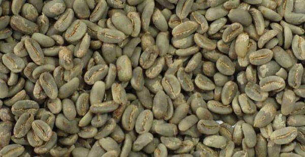 Gayo LONGBERRY ABYSSINIA arabica coffee bean
