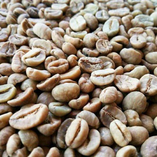 Gayo luwak coffee beans