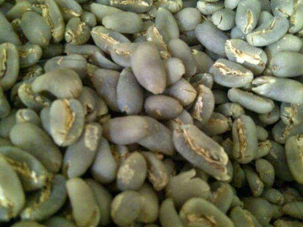 LONGBERRY ABYSSINIA arabica coffee bean