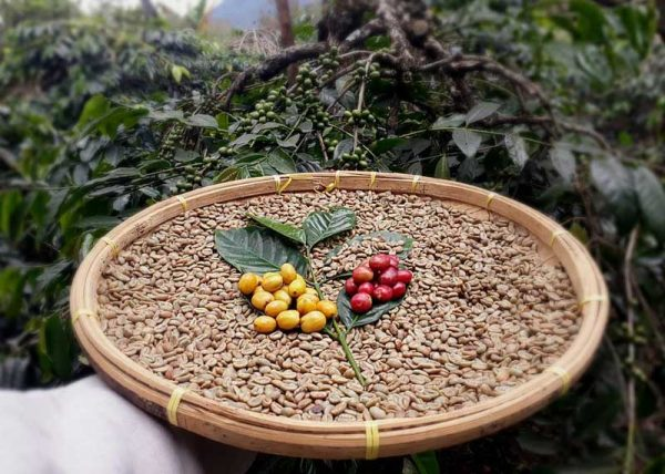 LONGBERRY ABYSSINIA arabica coffee beans