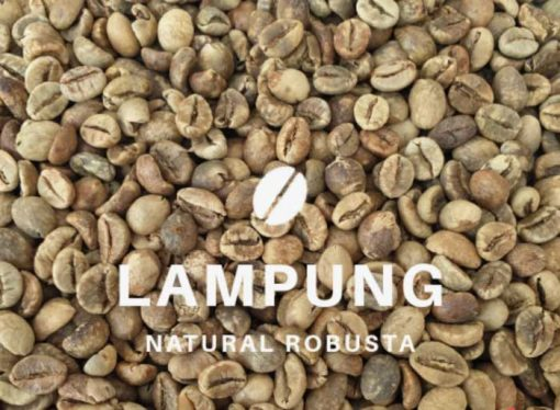 Lampung robusta coffee bean