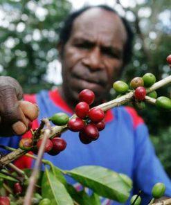 Papua Wamena Coffee Beans