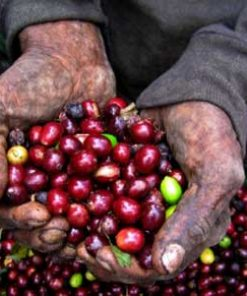 Wamena specialty Arabica Coffee Green Bean