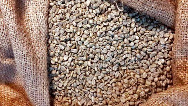 Java specialty arabica coffees bean