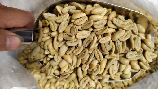 best long berry coffee bean
