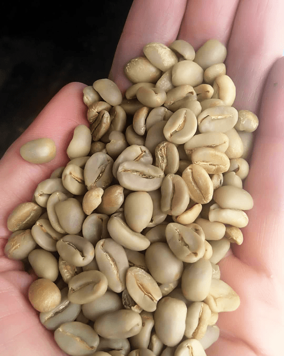 coffee bean supplier