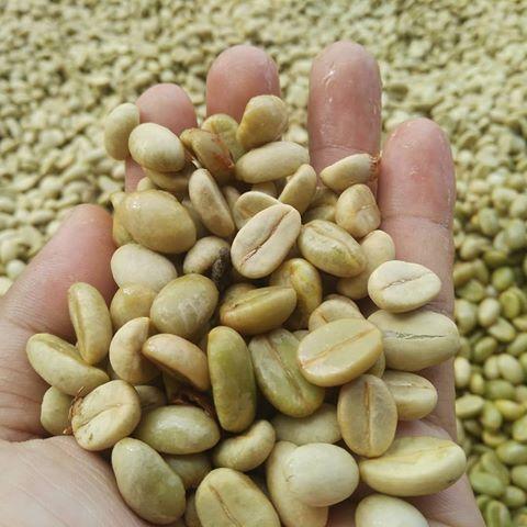 full washed gayo arabica green bean