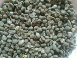 full washed gayo arabica green beans