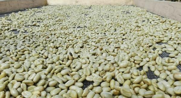 Java coffee beans