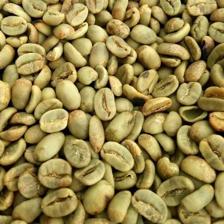 Java robusta coffee bean