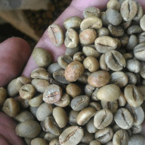 Java robusta unroasted coffee bean
