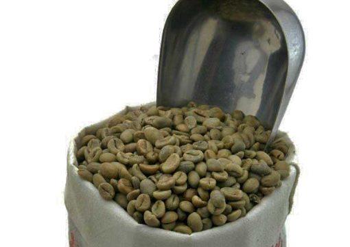 Java robusta unroasted coffee beans