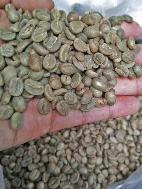 Java unroasted arabica coffee