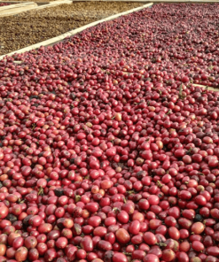 Specialty coffee online