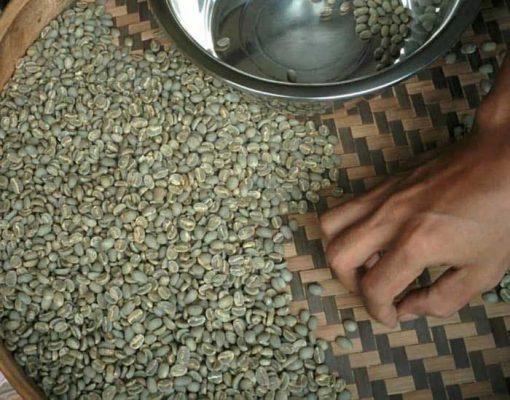 toraja kalosi coffee green bean