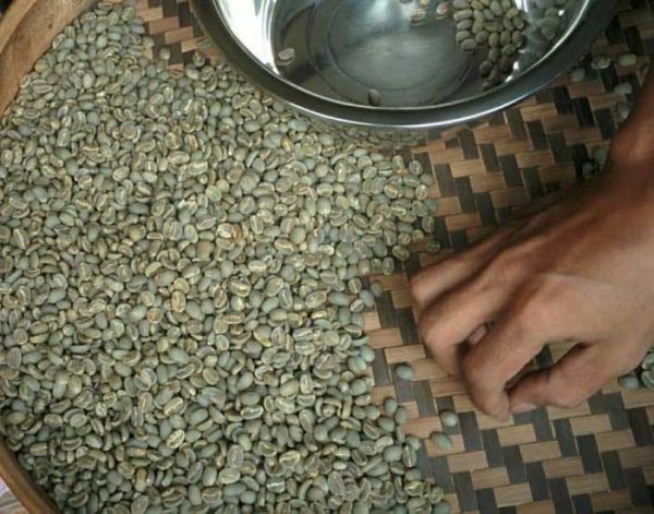 toraja kalosi coffee green bean