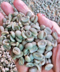 toraja kalosi coffee green beans
