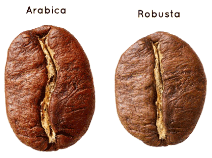 Roasted arabica robusta-coffee