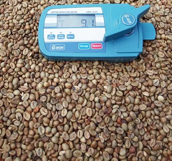 Best robusta Java Coffee